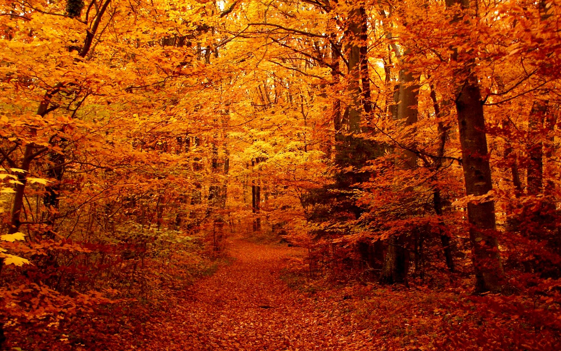 Fall Seasons Wallpaper   wwwwallpapers in hdcom 1920x1200