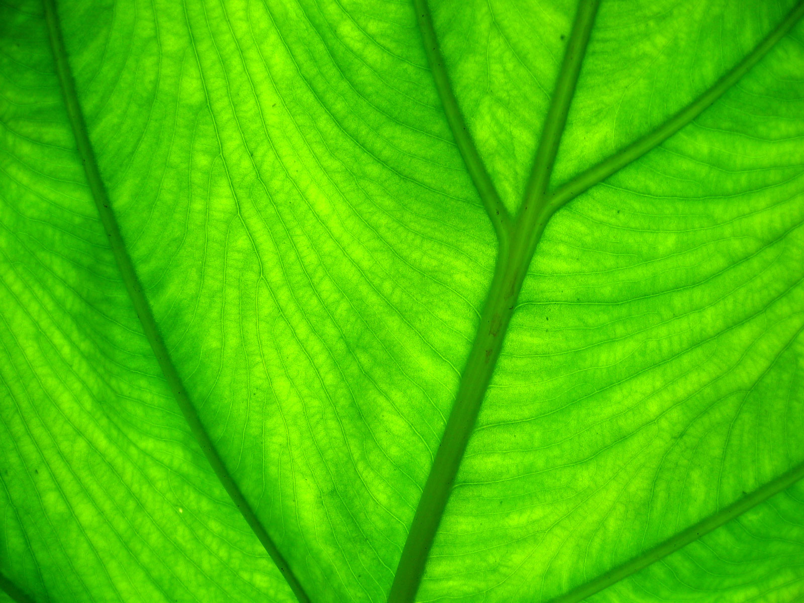 The best top desktop green wallpapers green wallpaper green background 1600x1200