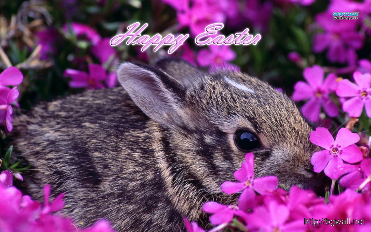 Easter Bunny Wallpaper Background Wallpaper HD 1280x800