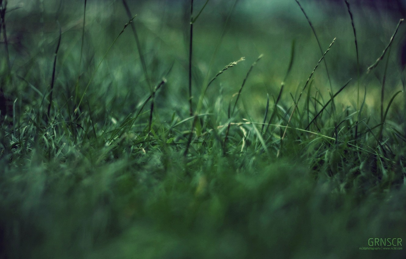 Wallpaper grass macro green garbage concentration images for 1332x850