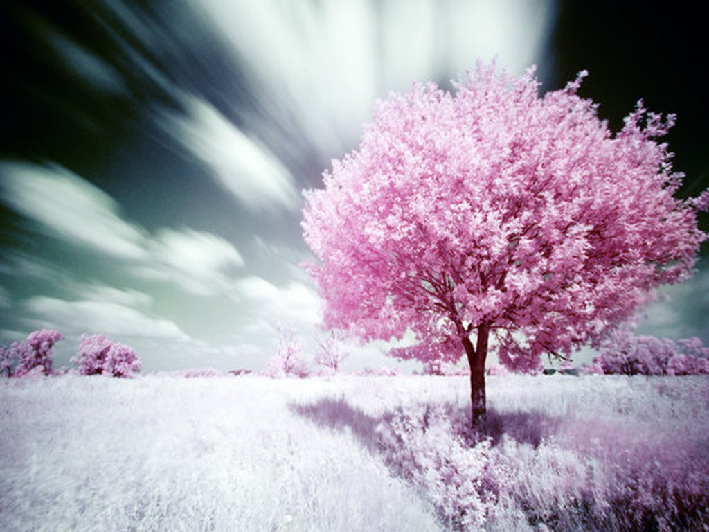 Pink Nature Wallpaper 1024x768