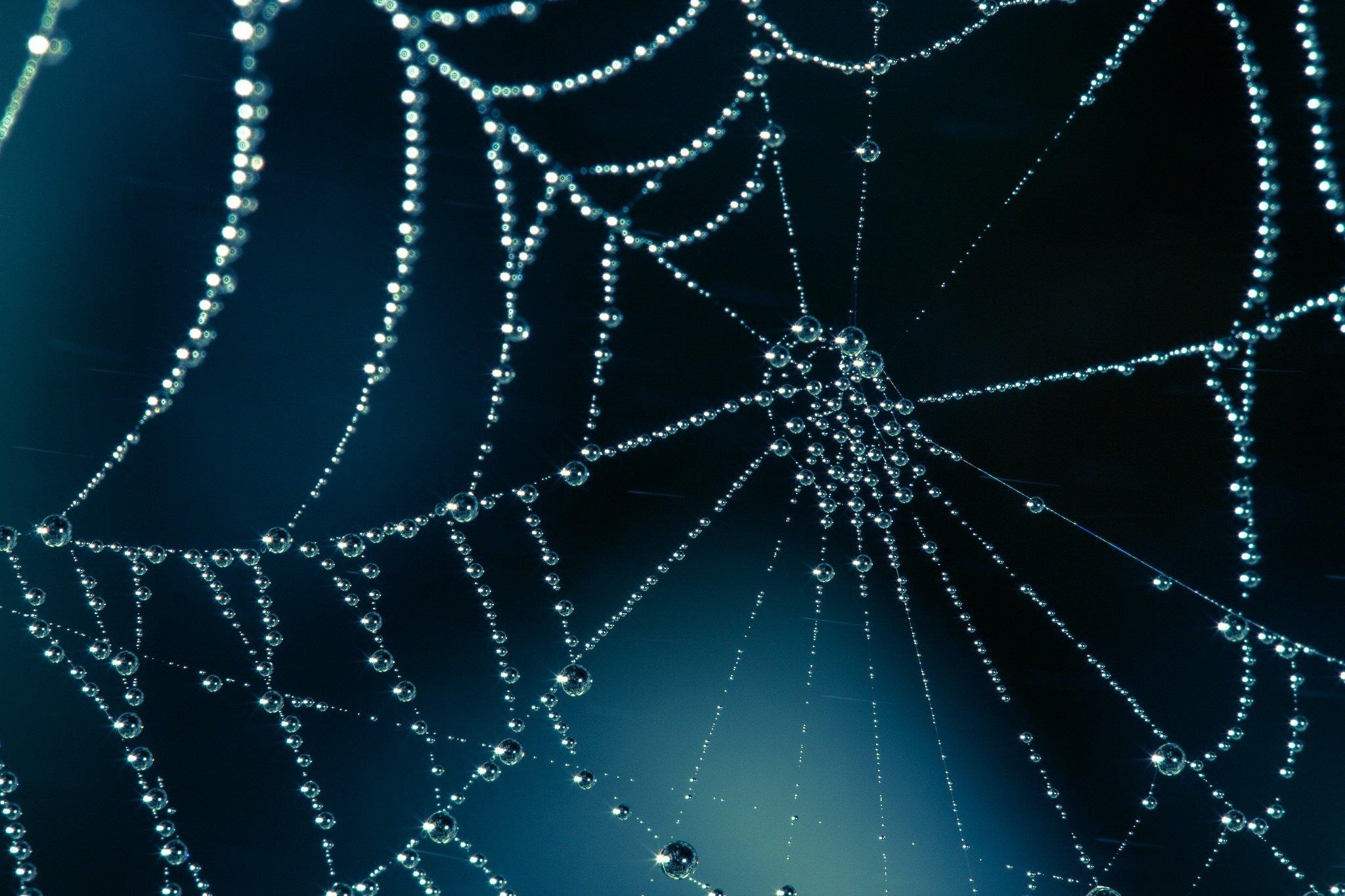 web drops macro shiny bokeh spider spiderweb wallpaper background 2048x1365
