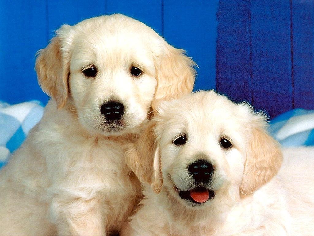 Cute Dog Wallpaper 1024x768
