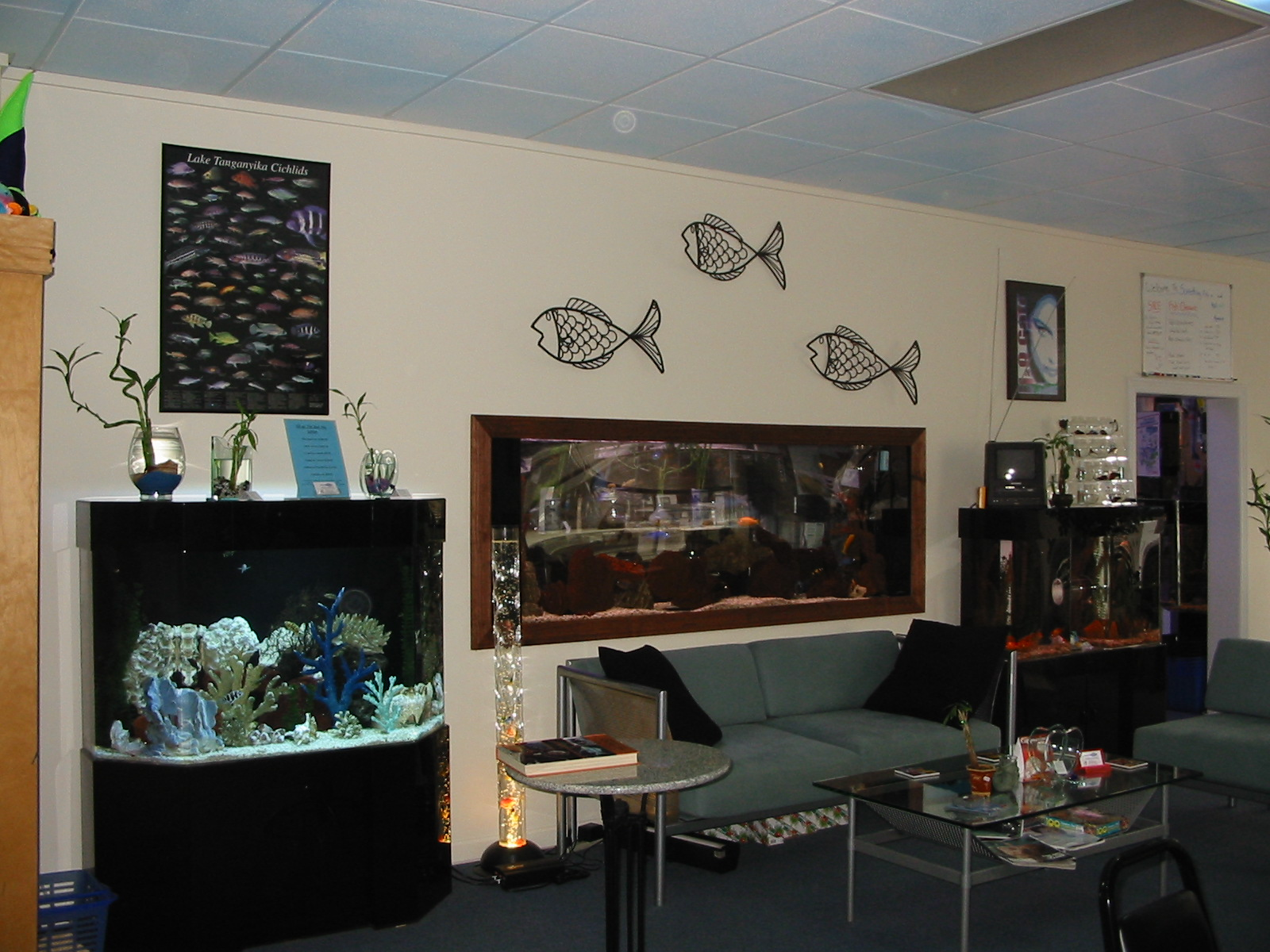 SALTWATER FISH STORE NEAR ME Pet Shop Near Me View Original 1600x1200