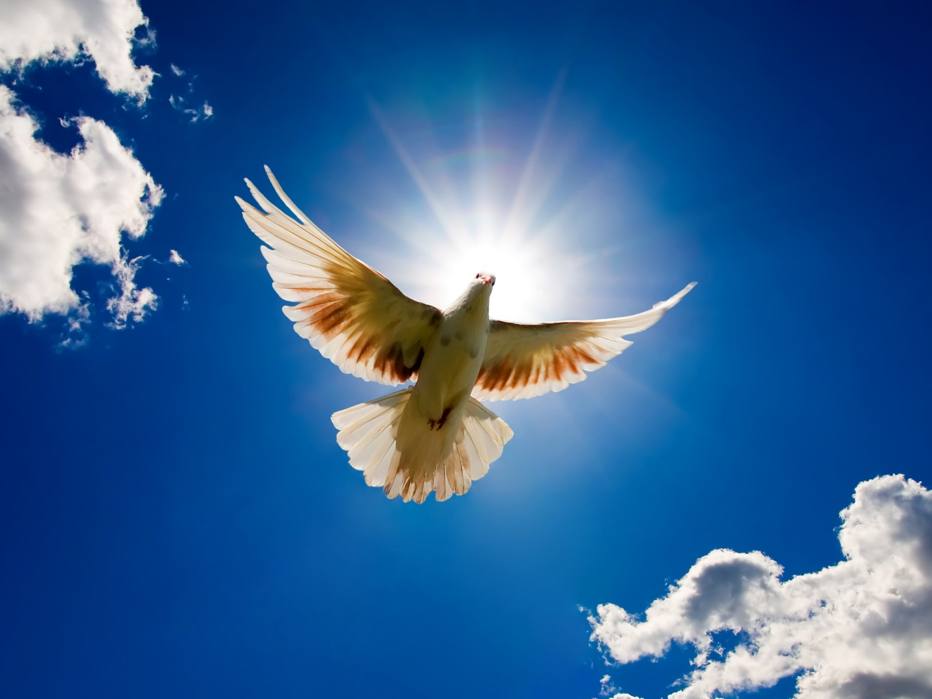 Scenery Wallpaper   Includes a Dove Bird from the Sky Makes One 1920x1440