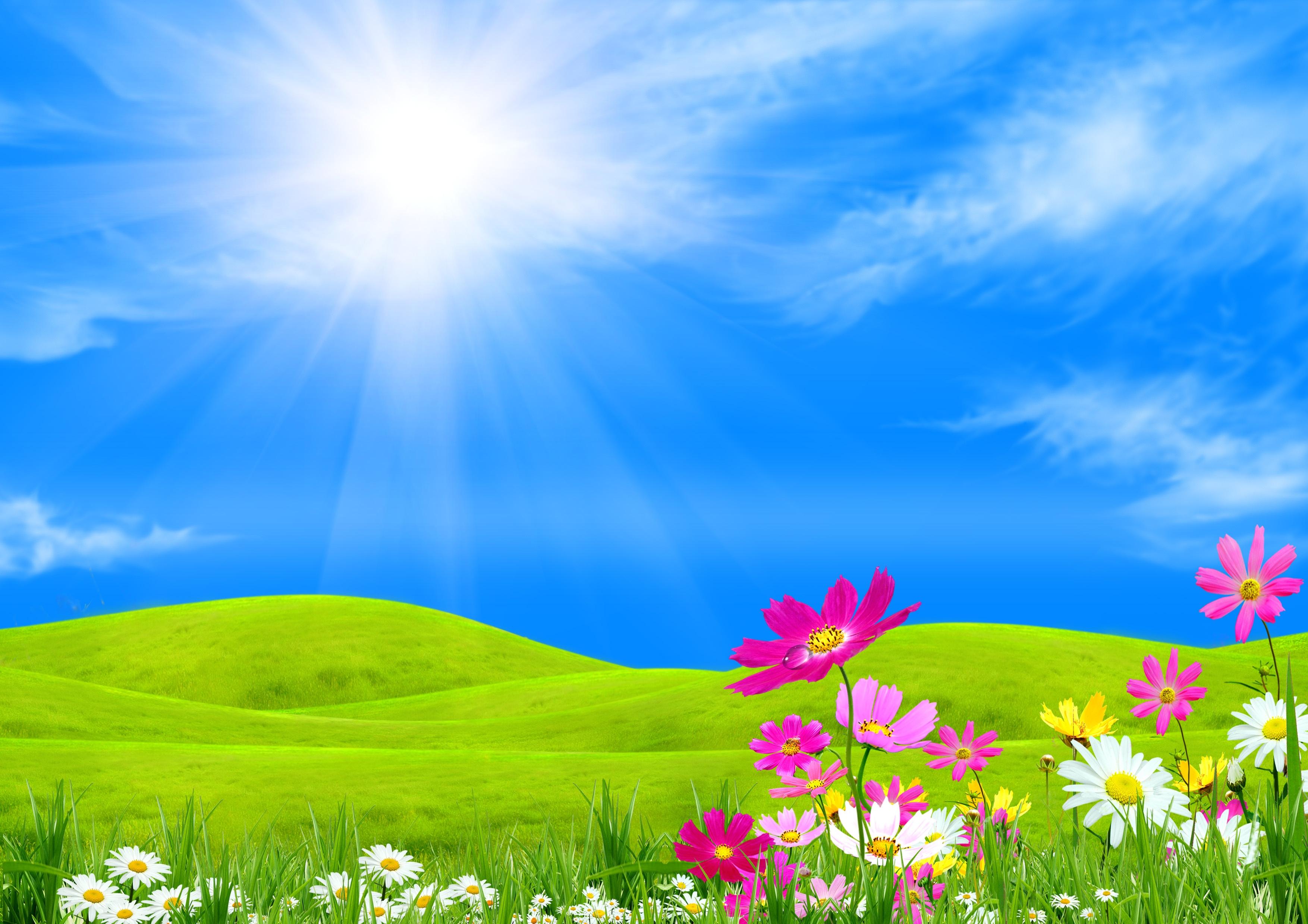 Free Spring Background Images - WallpaperSafari