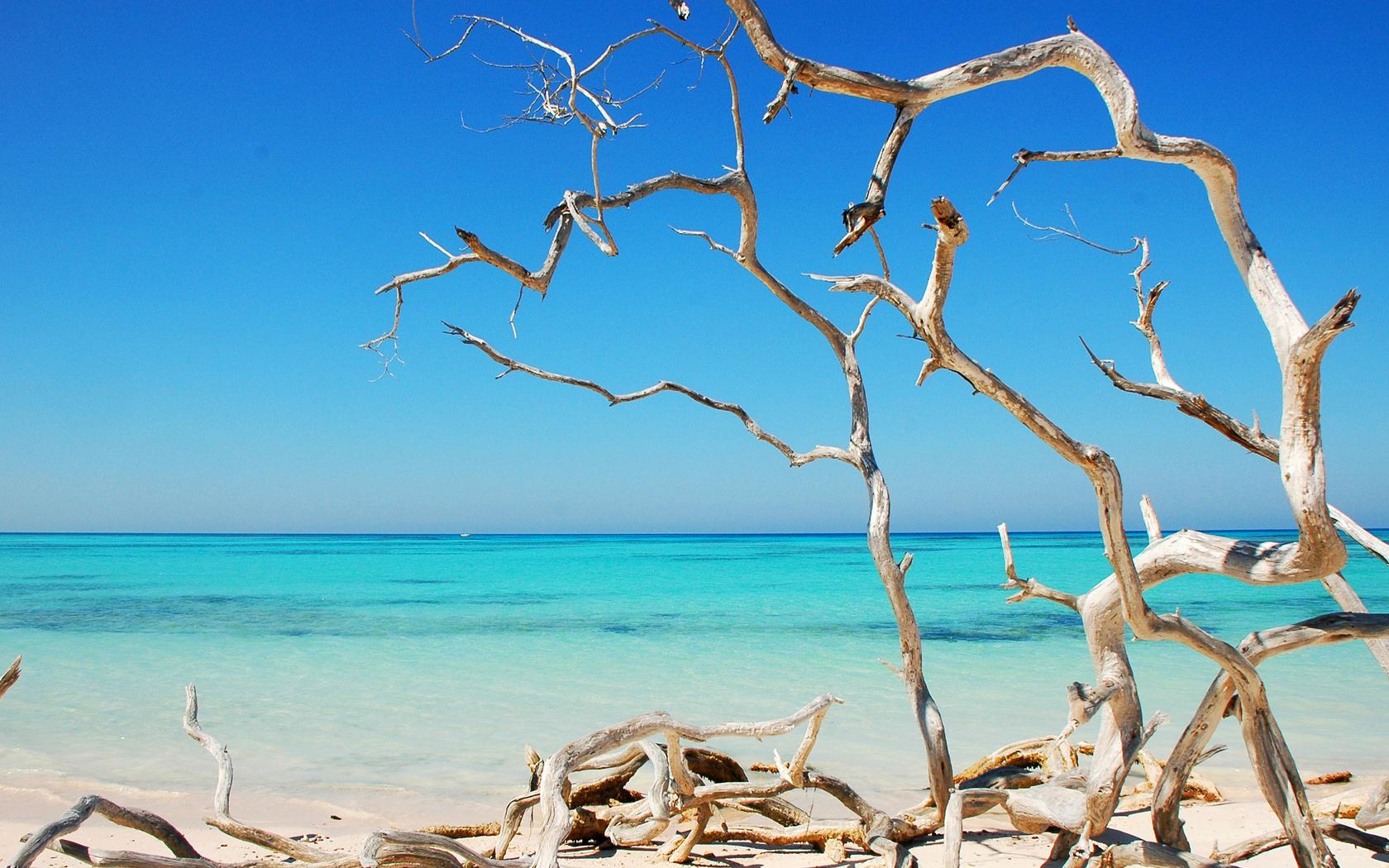 Exotic beach Widescreen Wallpaper   11153 1680x1050