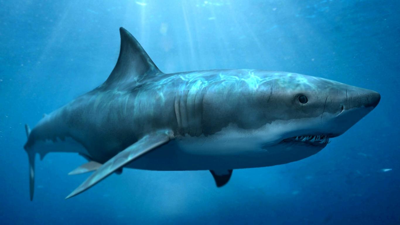 Sharks Megalodon Wallpaper Image Picture 1366x768