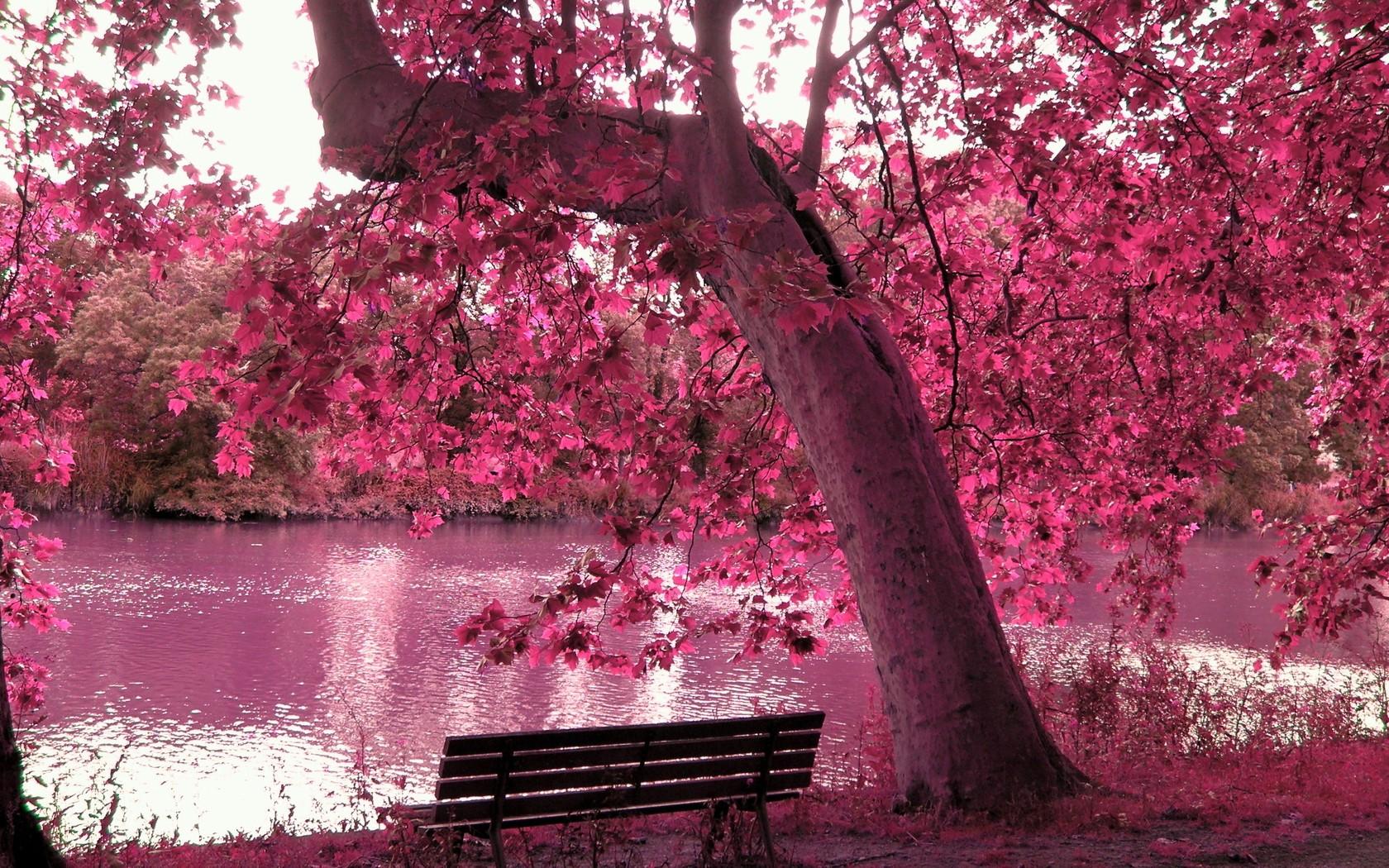 Pics Photos   Spring Season Wallpapers 1680x1050