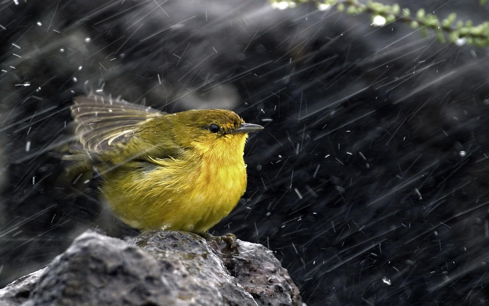 Bird In Rain HD Wallpaper 1920x1200