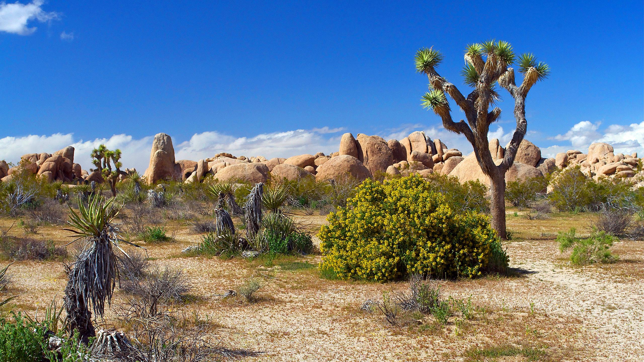 природа животные пустыня  № 3146365 бесплатно