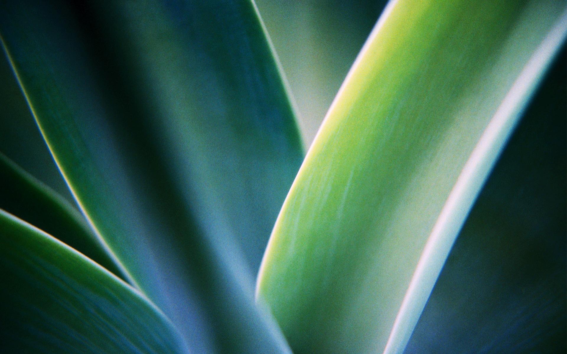 Download windows 7 exotic plant wallpaper HD wallpaper 1920x1200
