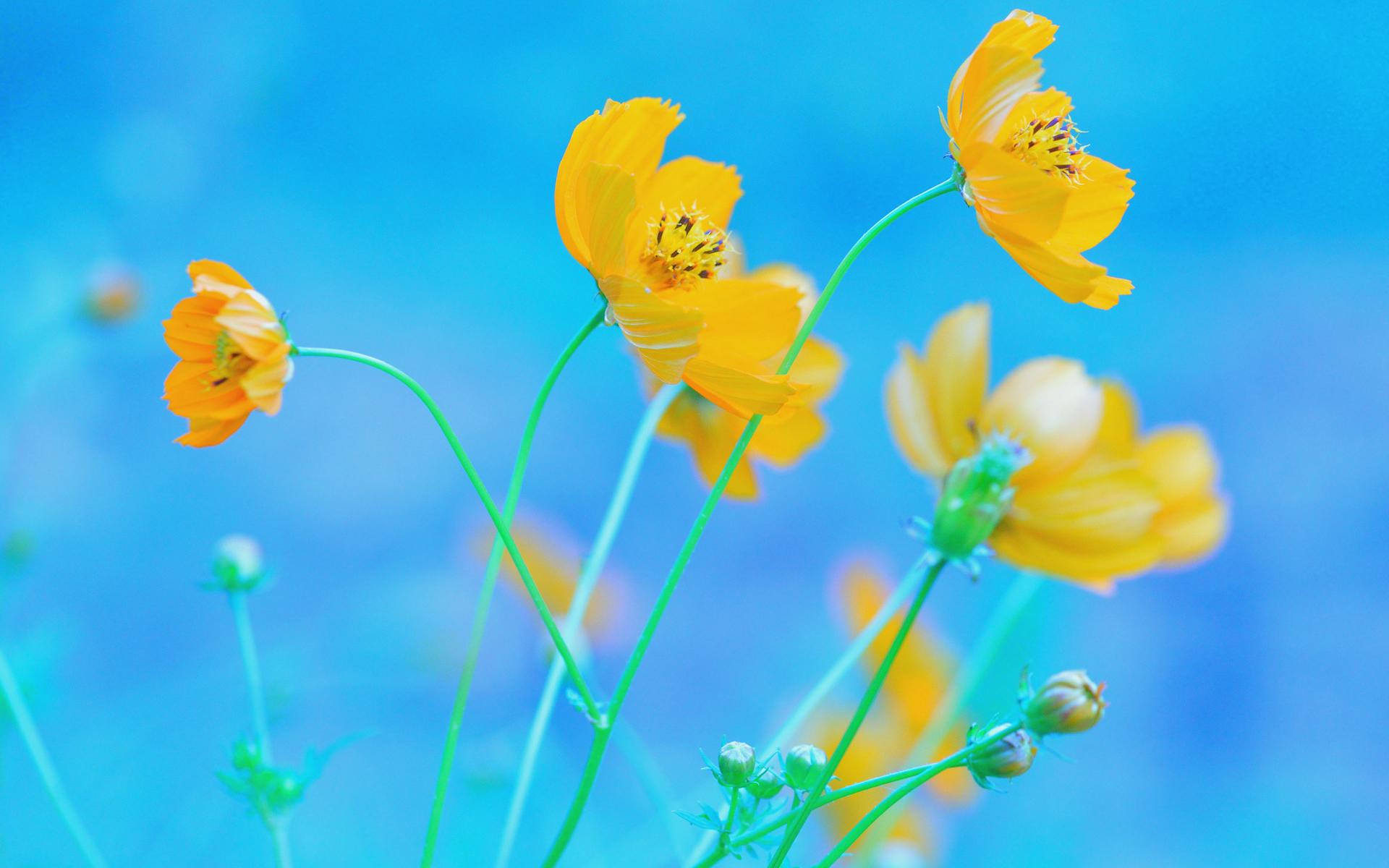 45 Blue And Yellow Floral Wallpaper On Wallpapersafari