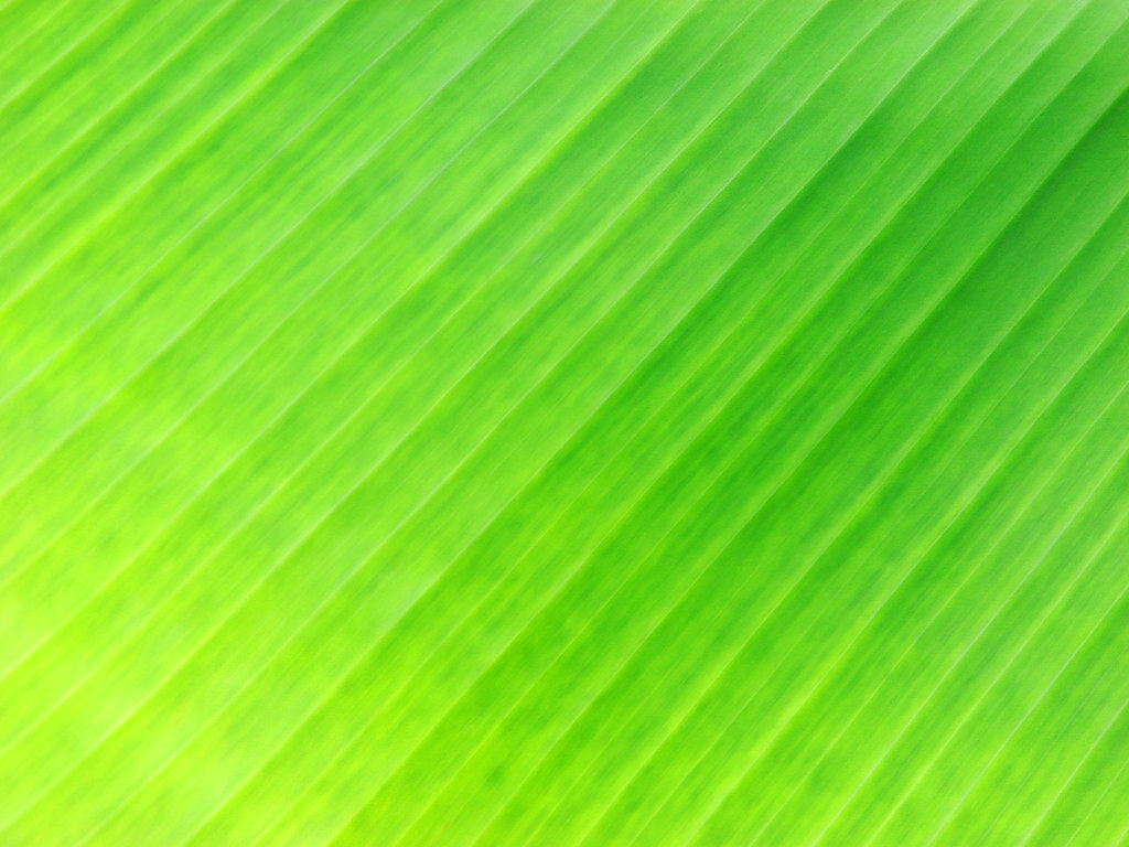 Banana Leaf Wallpaper Banana Leaf Flickr Photo 1024x768