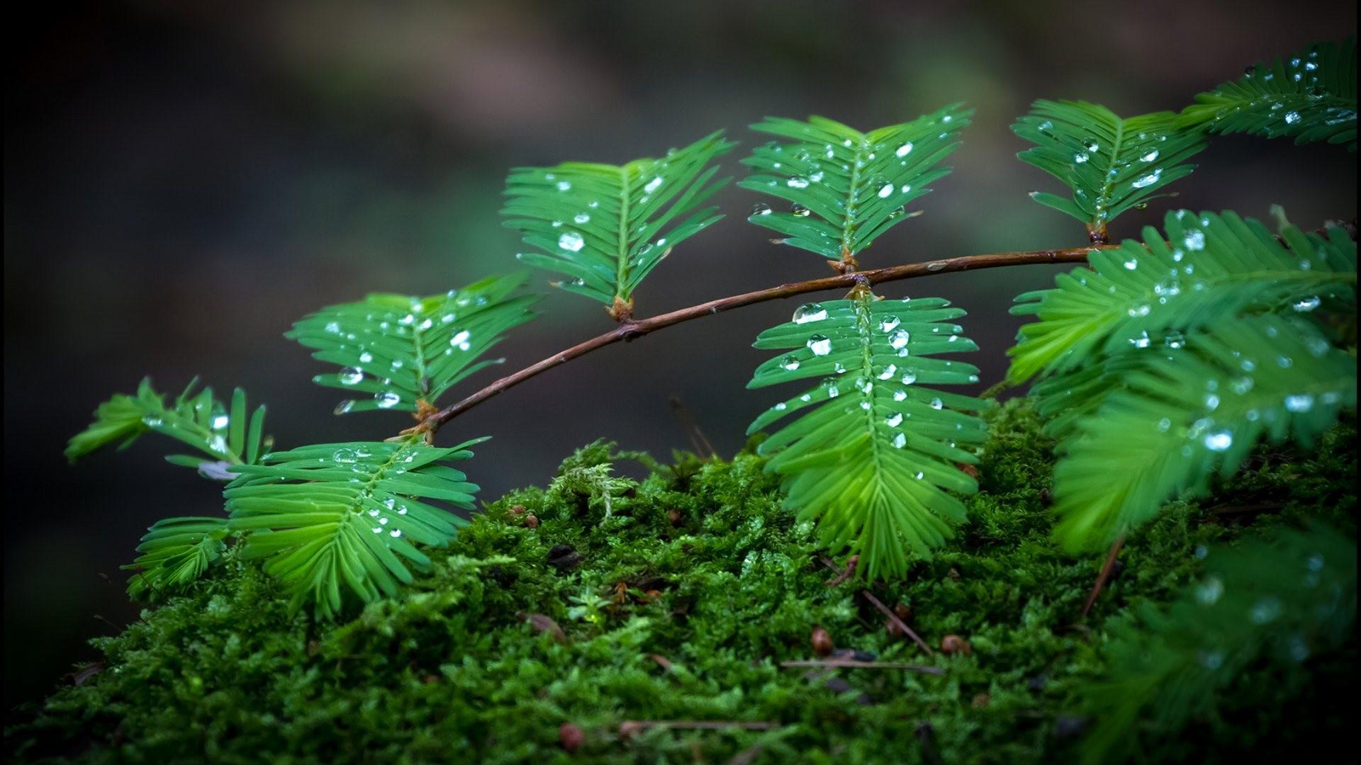 Green Leaves Water Rain HD Wallpapers Desktop Images Full 4k High 1920x1080