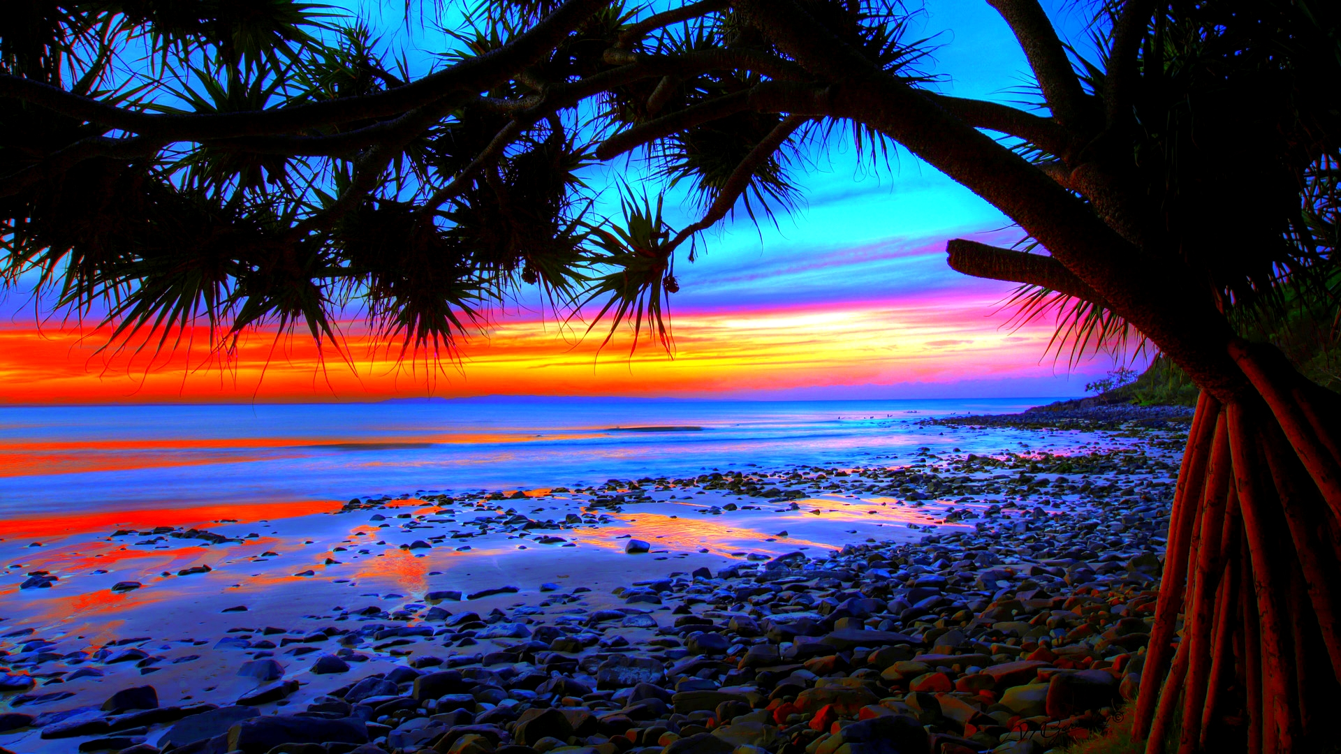 Sunset Over Beach Of Palm Trees Hd Wallpaper: Palm Tree Sunset Wallpaper