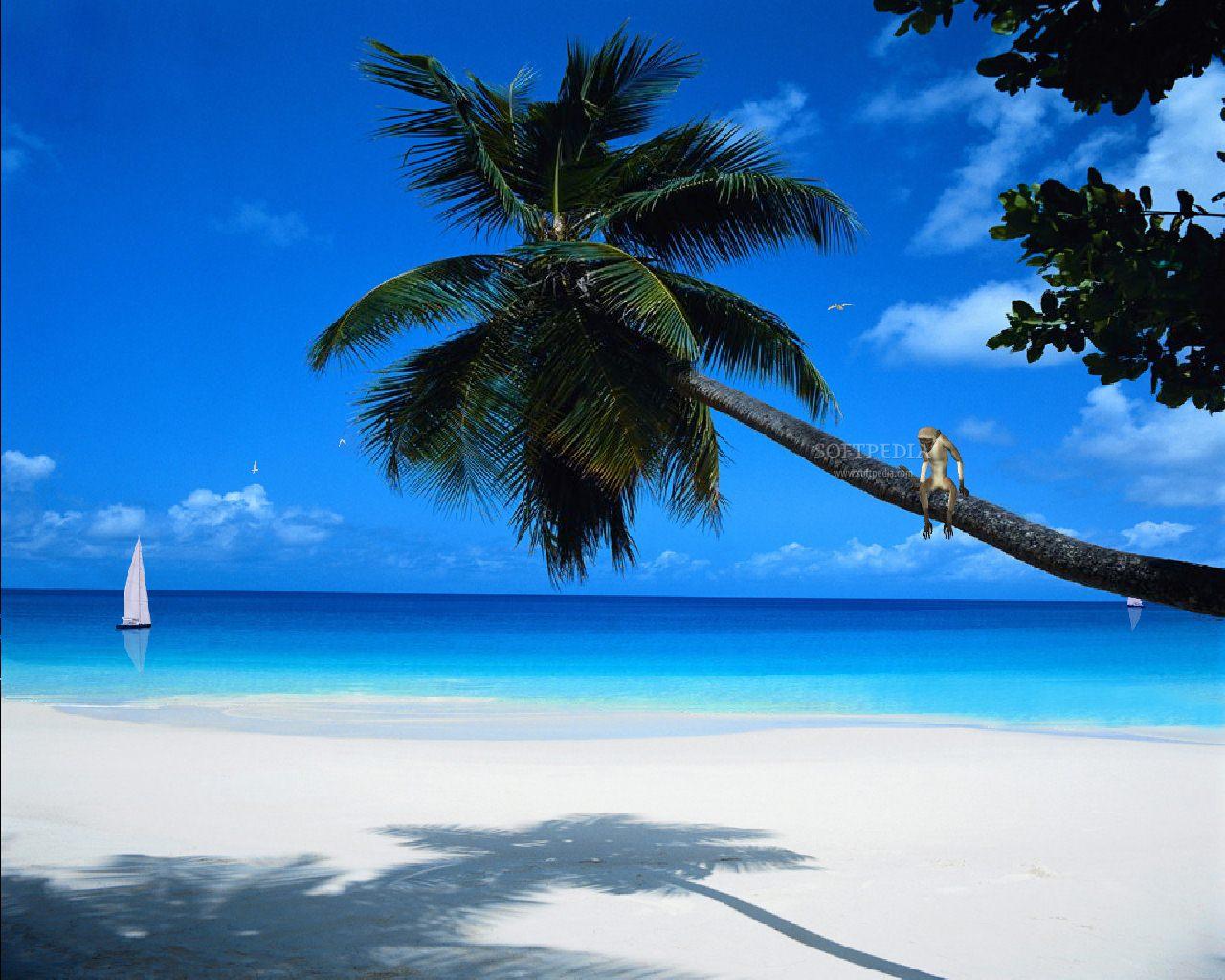 Paradise Wallpaper Desktop 8165 Hd Wallpapers in Beach   Imagescicom 1280x1024