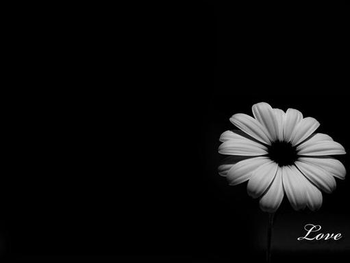 20 Gorgeous Black Wallpapers 511x383