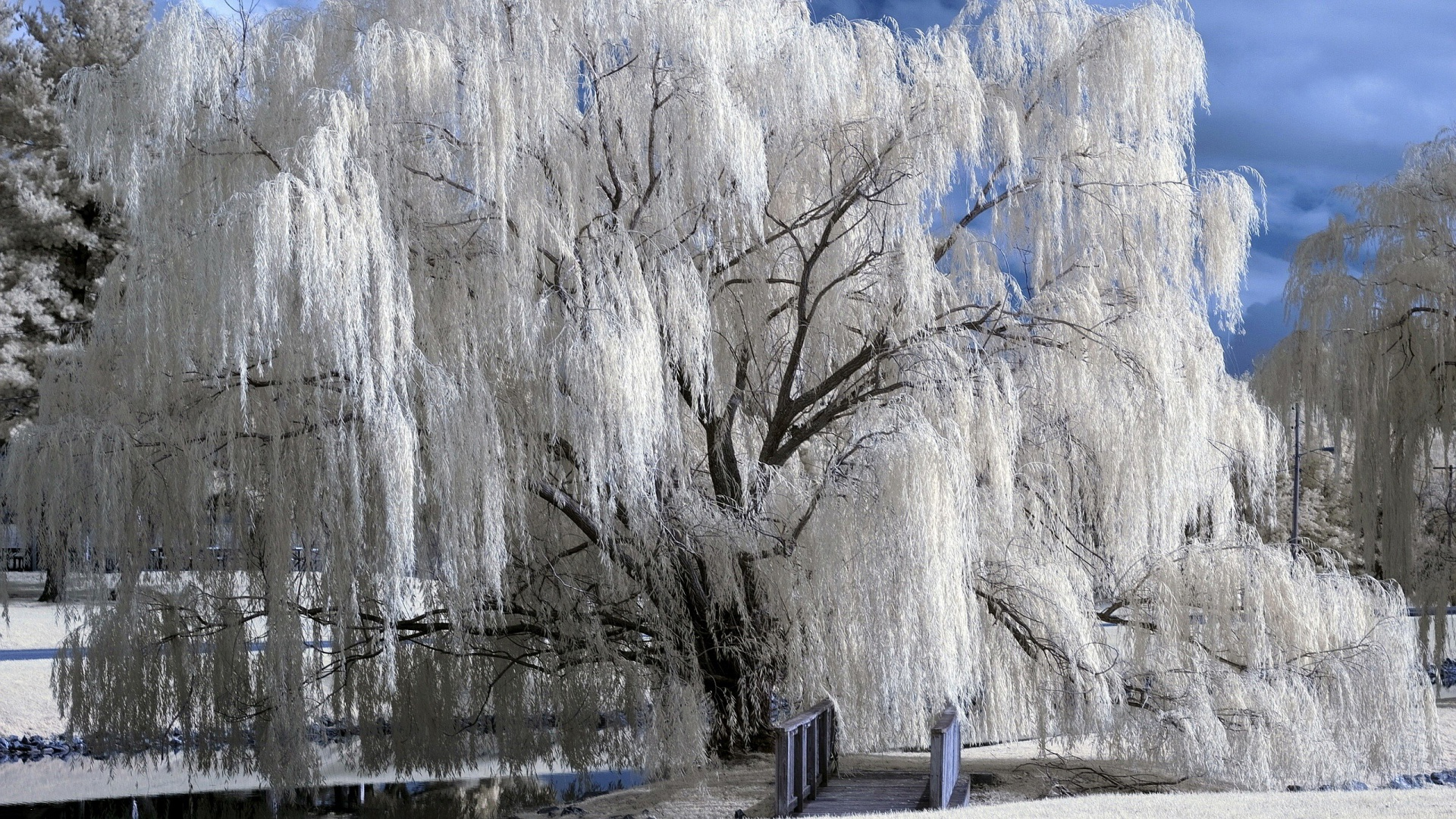 Winter Wallpapers HD 1920x1080