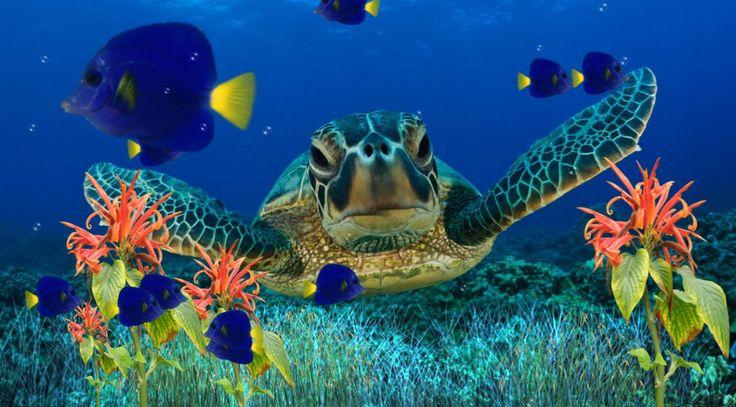 free screensavers   Bing Images Design Pinterest Reef Aquarium 736x407
