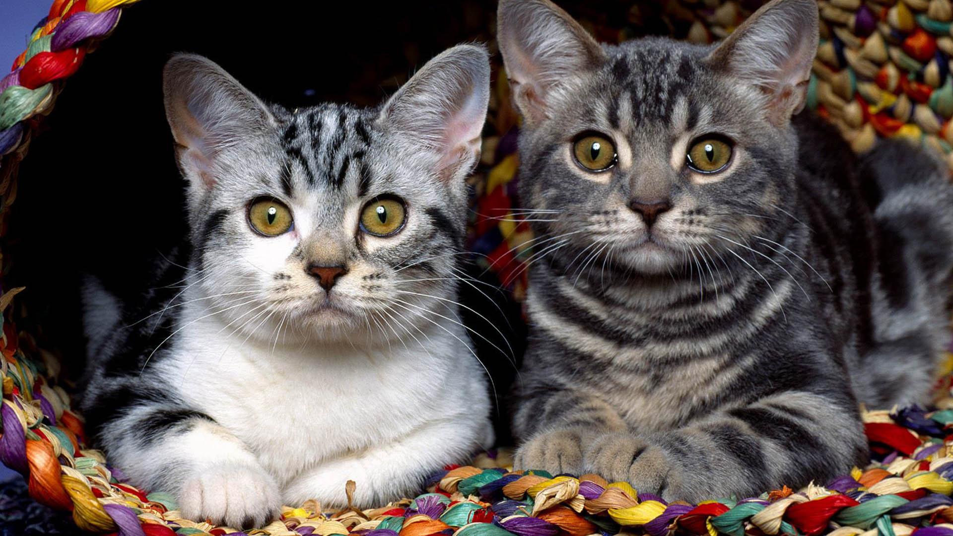 HD Widescreen Cat Wallpaper - WallpaperSafari
