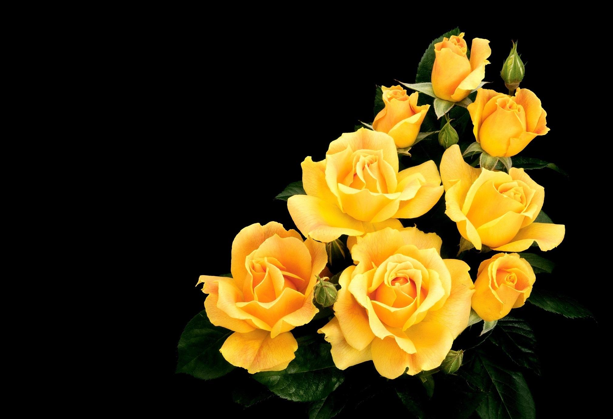 Годовщиной год, картинка желтые розы на телефон