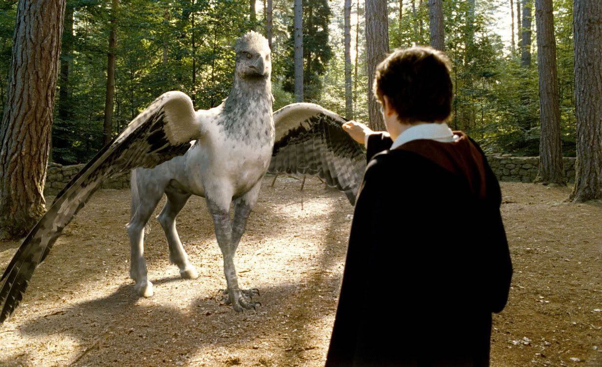 Buckbeak Harry Potter The Boy Who Lived in 2019 Hippogriff 1235x753
