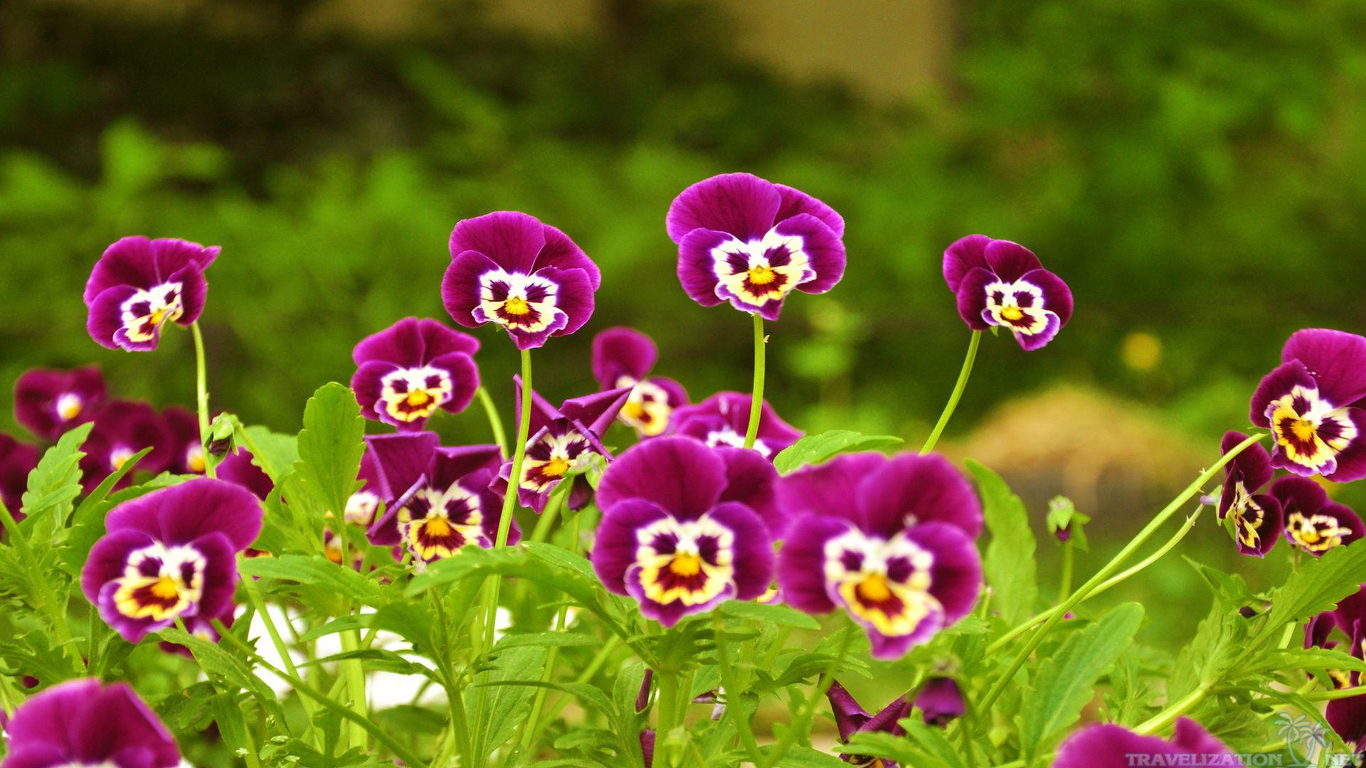 Very Nice Flowers Wallpapers