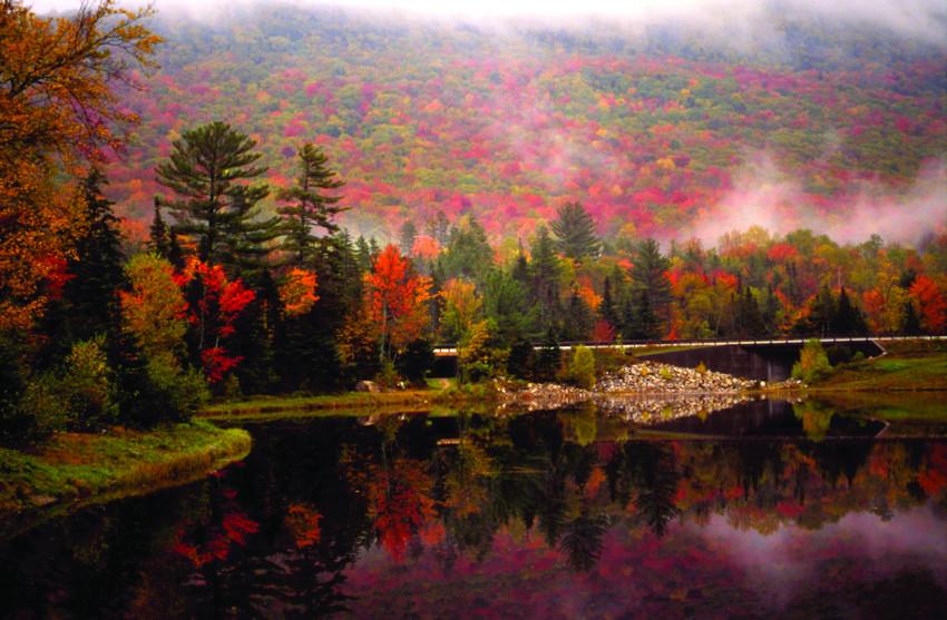 maple leaf wallpaper high resolution