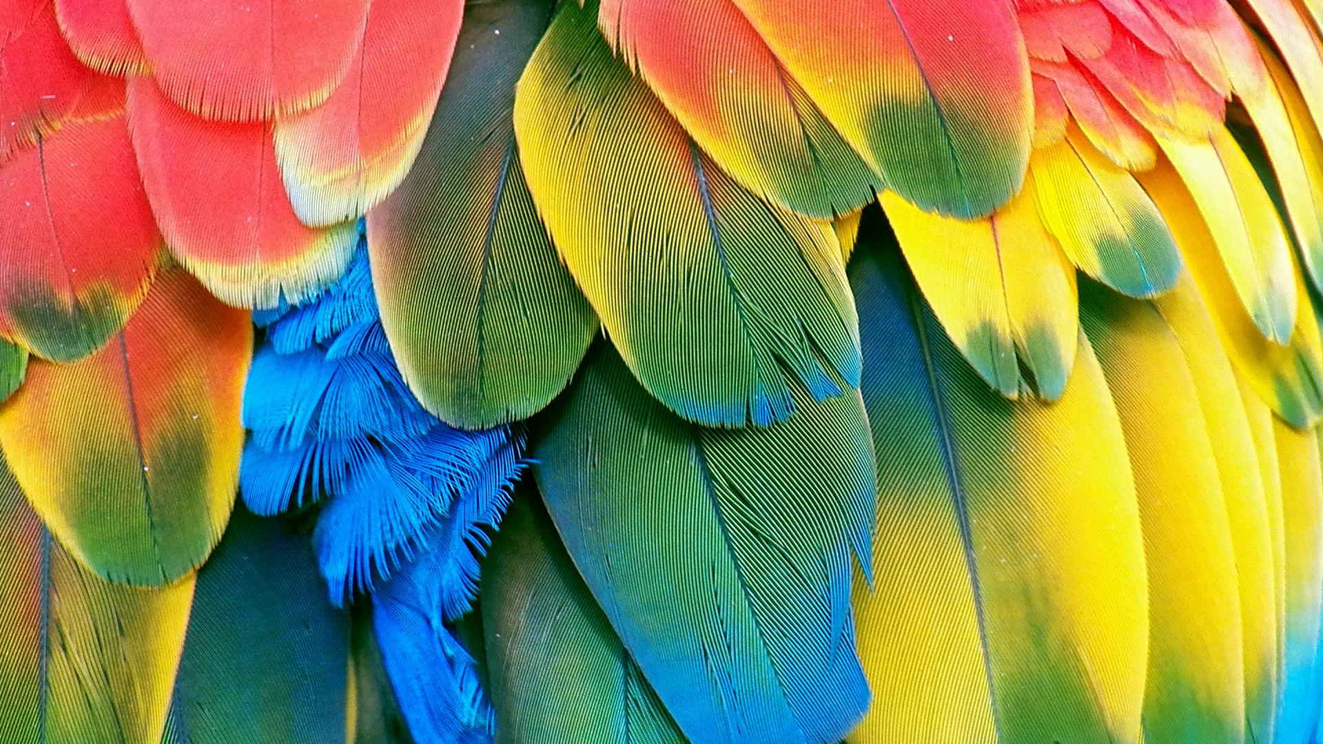 Parrot Wallpapers 26 WallpapersExpert Journal 1920x1080
