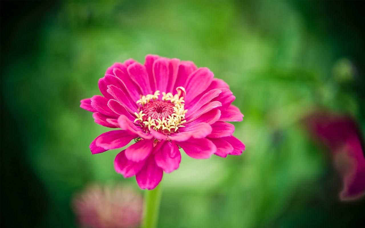 Charming feminine pink Flowers HD Wallpaper 9 Flower Wallpapers 1280x800