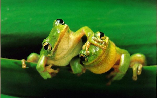 cute frog funny hd pictures 600x375