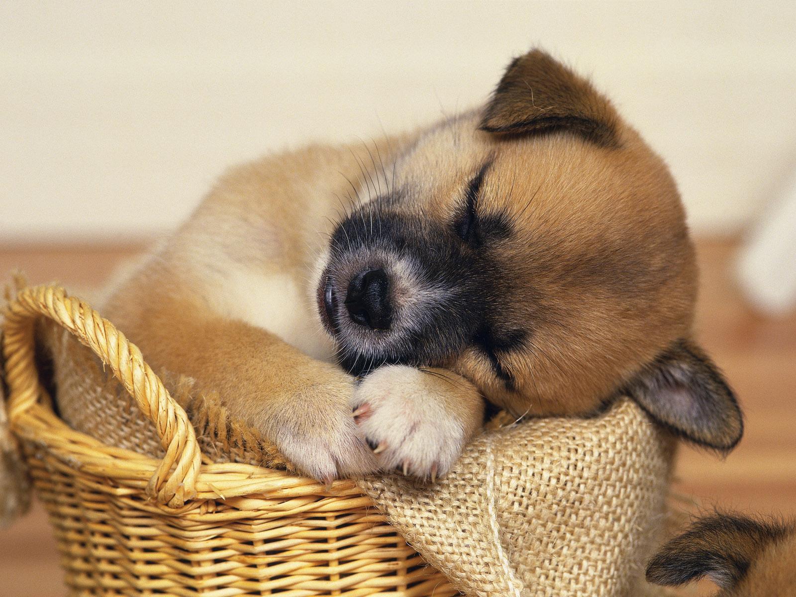 Cute Dog Wallpaper  Downloadjpg 1600x1200
