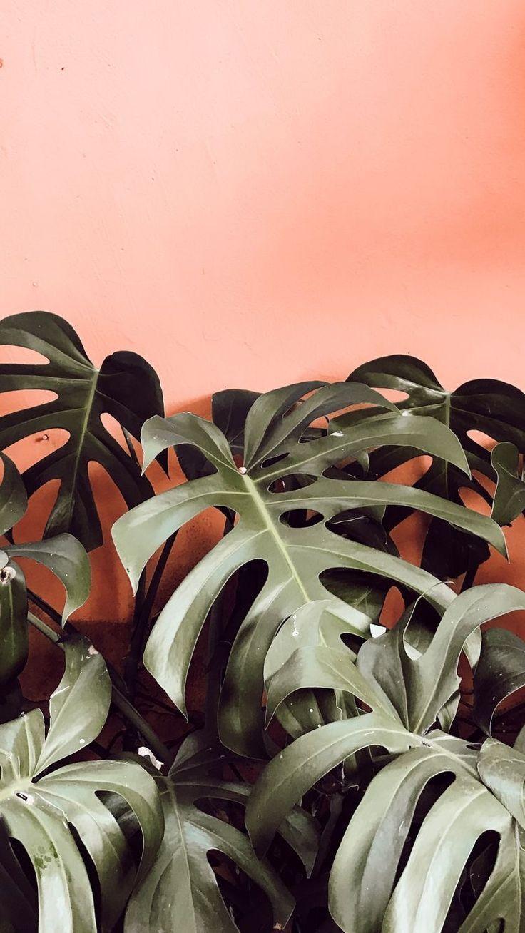 Mint the SpringSummer 2020 colour Trend Plant wallpaper Plant 736x1308