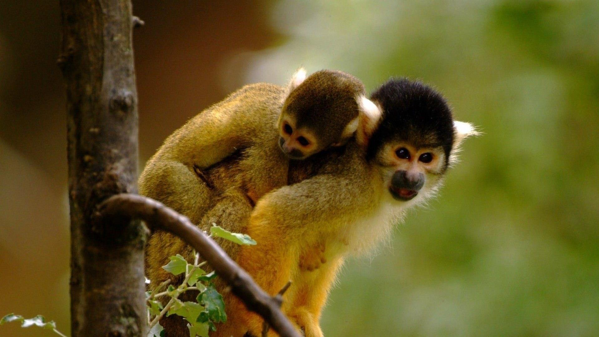 loving monkeys cute animal wallpapers 1384jpg 1920x1080