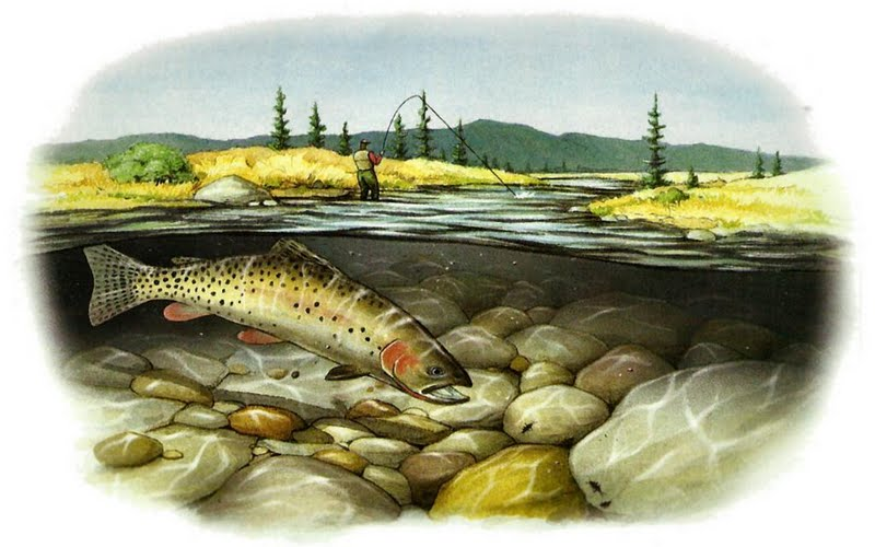 Trout Wallpaper Cutthroat trout wallpaper 800x500