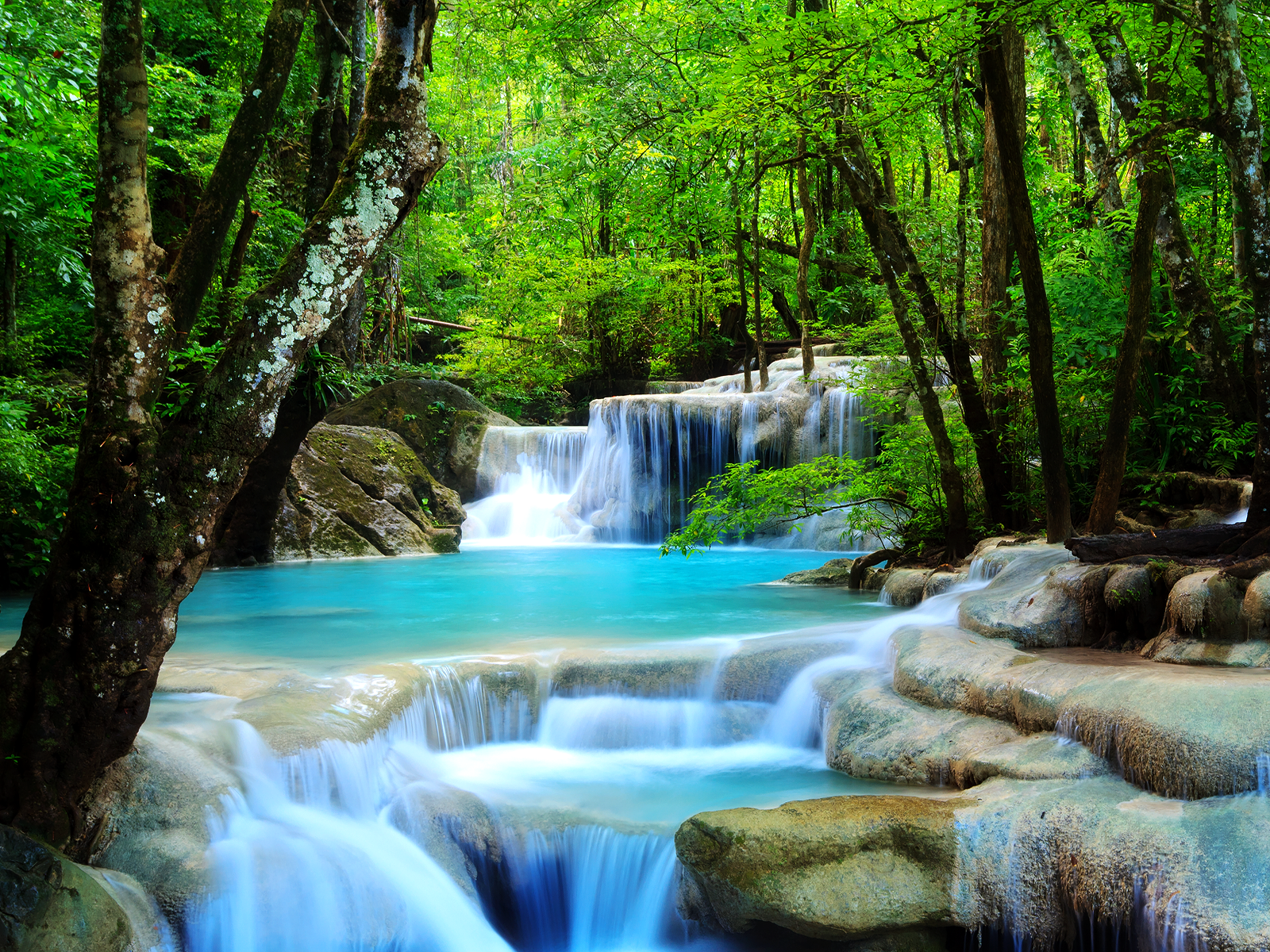 Forest Waterfall wallpaper What We Have Learned From Romney Ryan 1600x1200