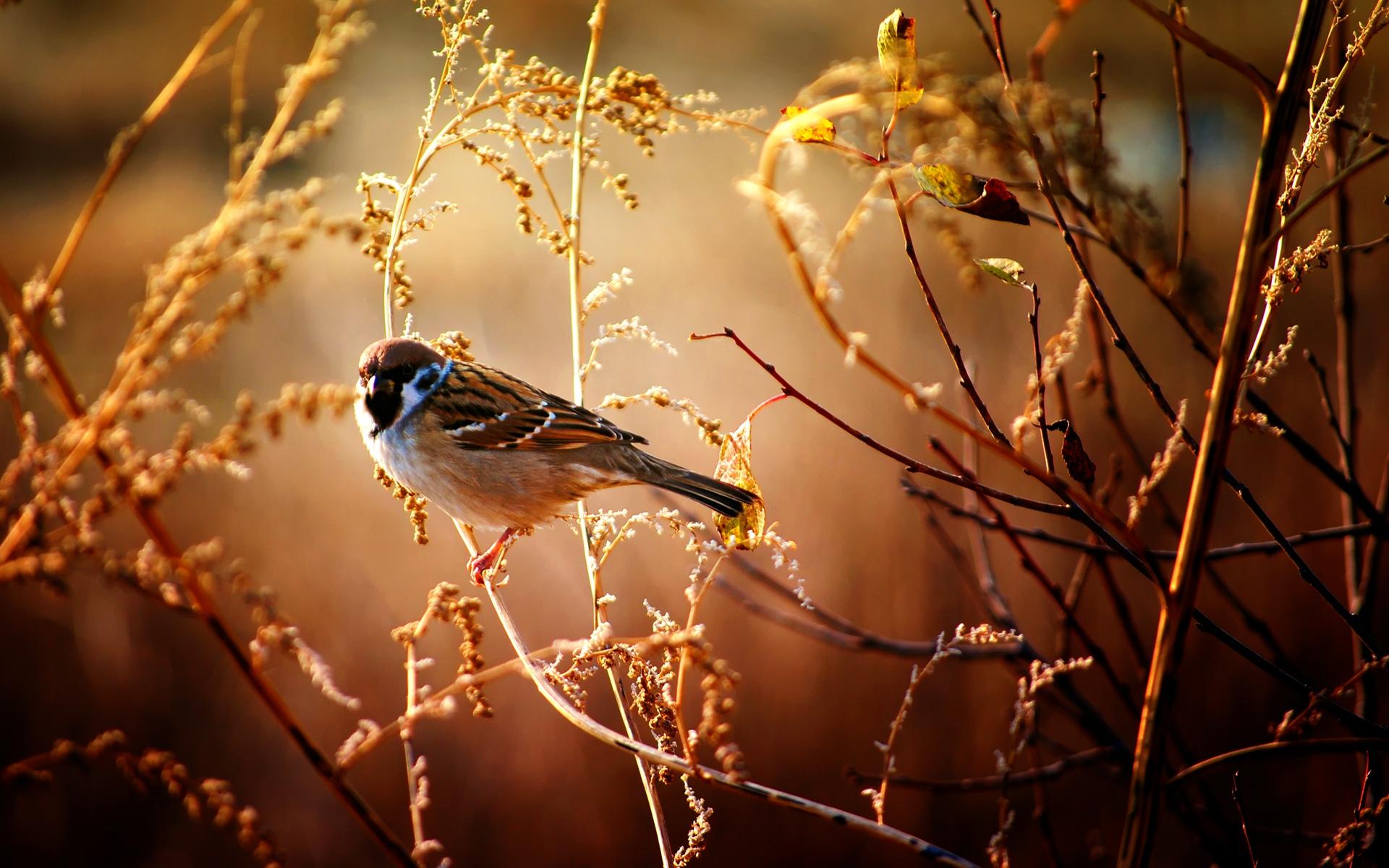 Download Nature Bird HD Wallpaper 1920x1200