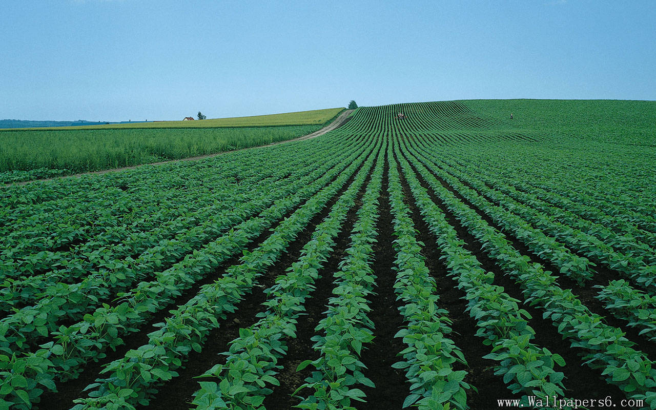 green farm scenery Landscape Wallpapers   download wallpapers 1280x800