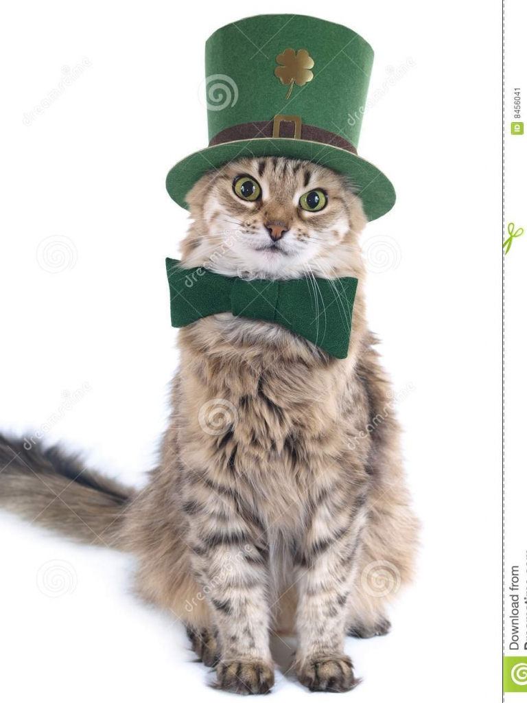 download image St Patrick S Day Cat PC Android iPhone and 768x1024