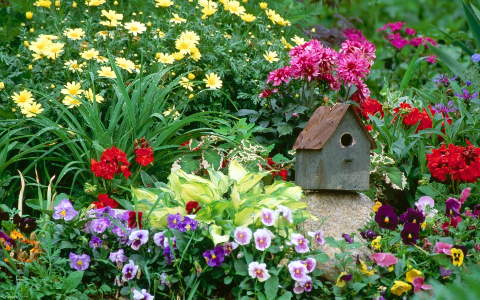 Garden Colour Flower wallpapers HD   185869 1920x1200