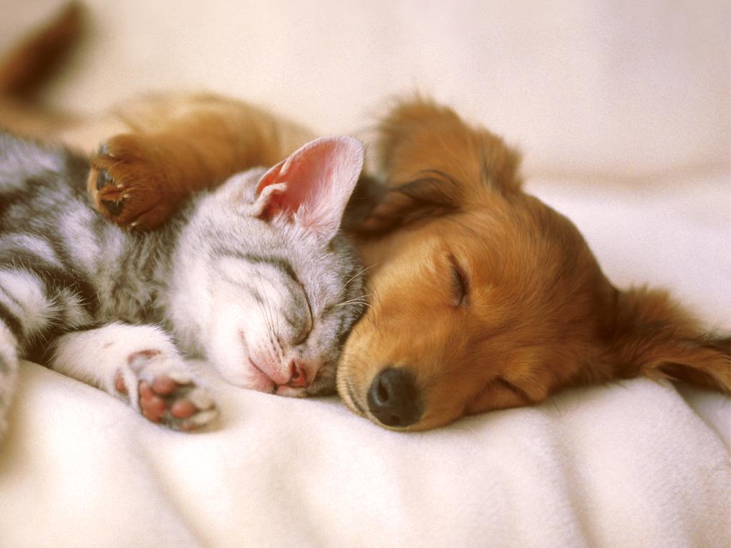 Cute Pets Wallpaper Animal desktop background Animal Wallpapers 1024x768