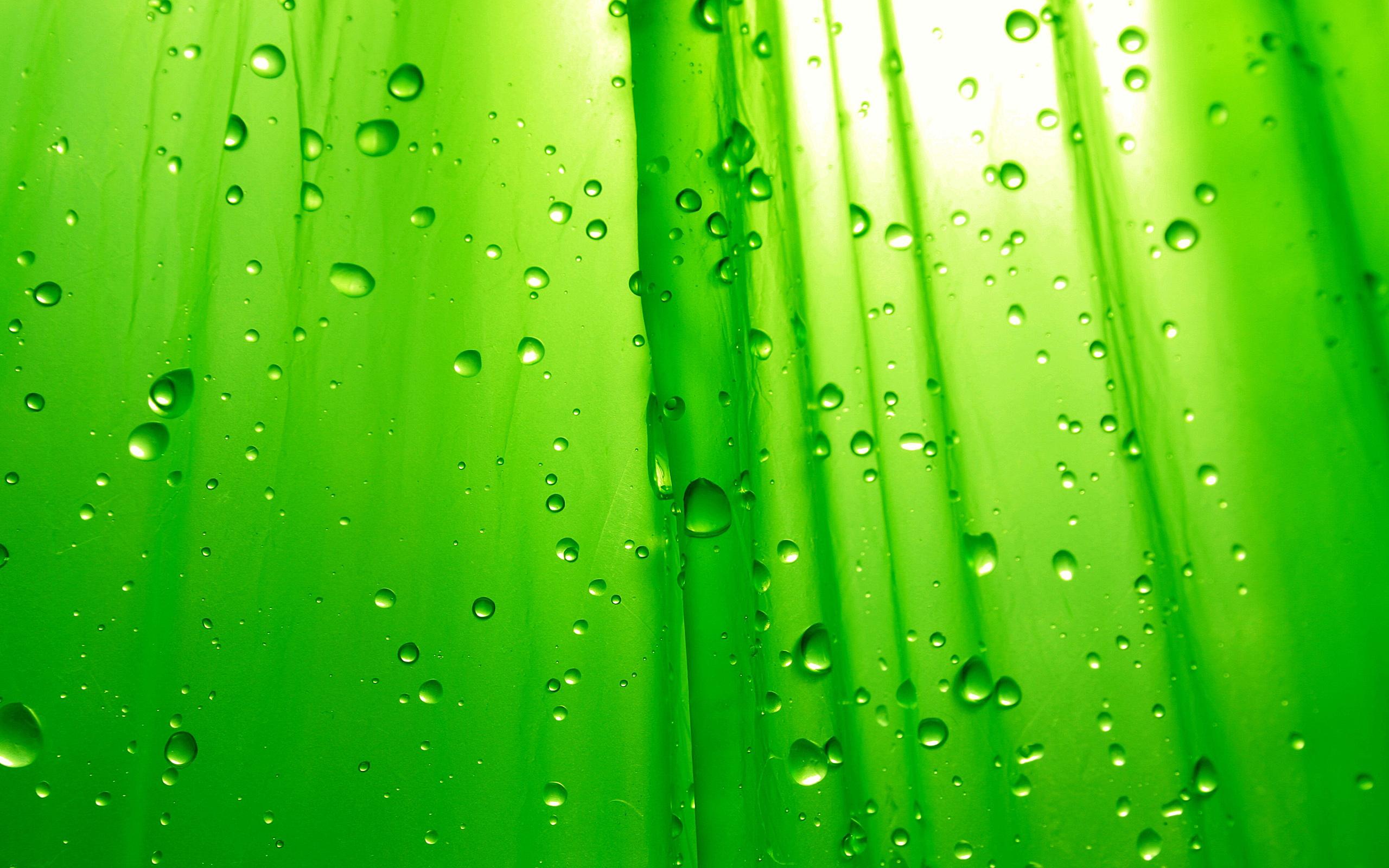 Description Green HD Wallpaper is a hi res Wallpaper for pc desktops 2560x1600