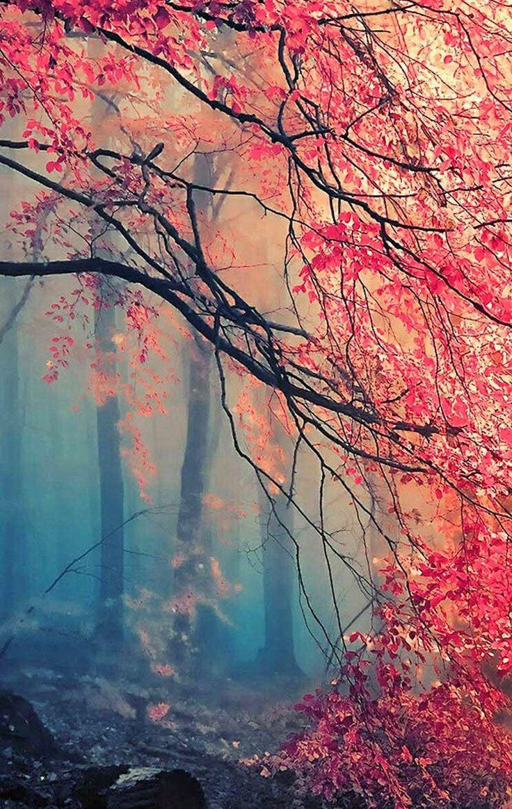 Tree Autumn Iphone Wallpaper IPhone Wallpapers Pinterest 736x1161