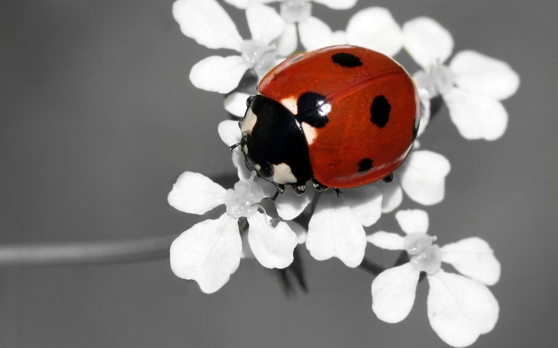41   cute ladybug wallpaper on wallpapersafari