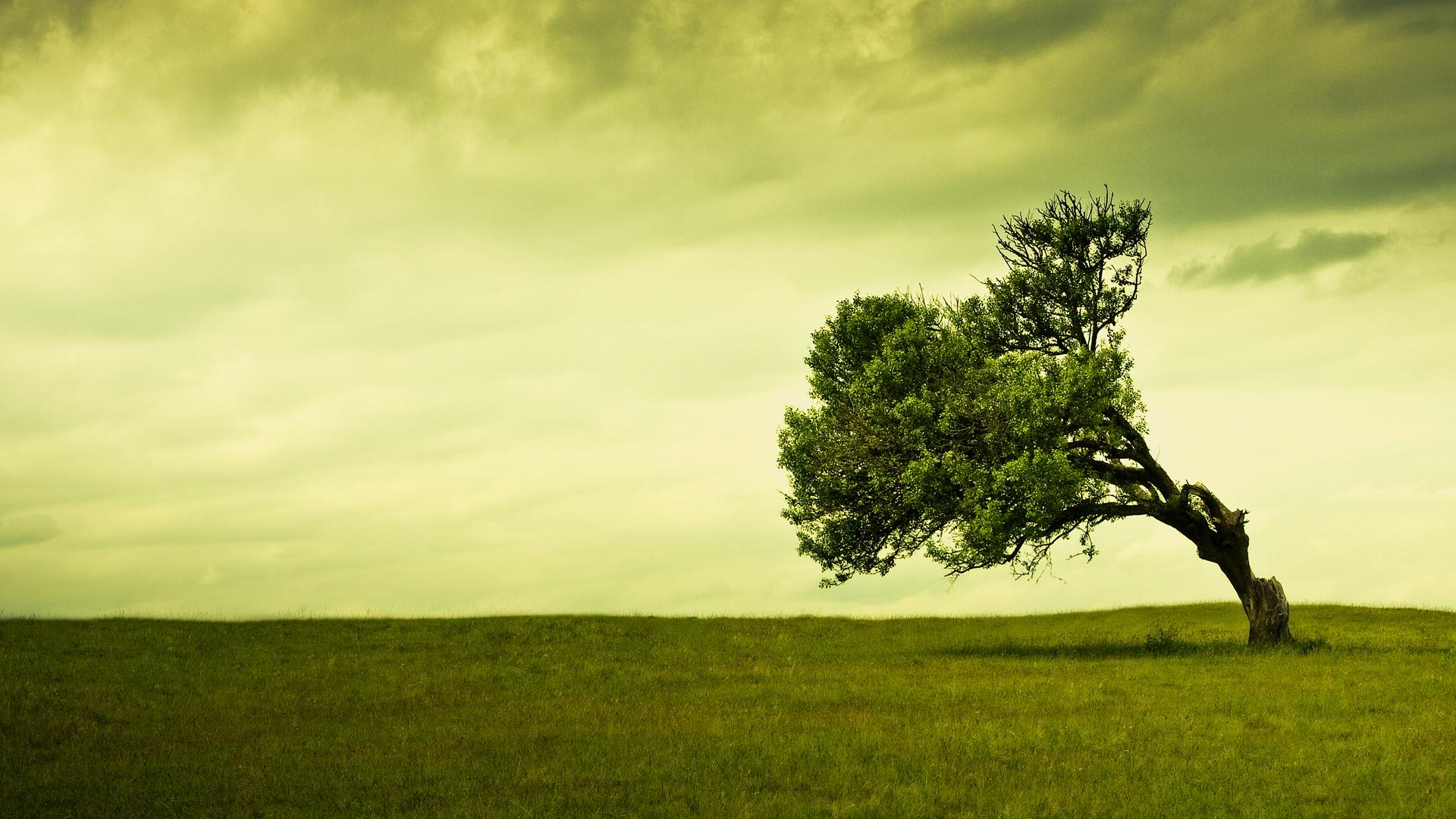 <b>Landscape</b> Astonishing Nature Quality <b>Trees Background</b> Picture ...
