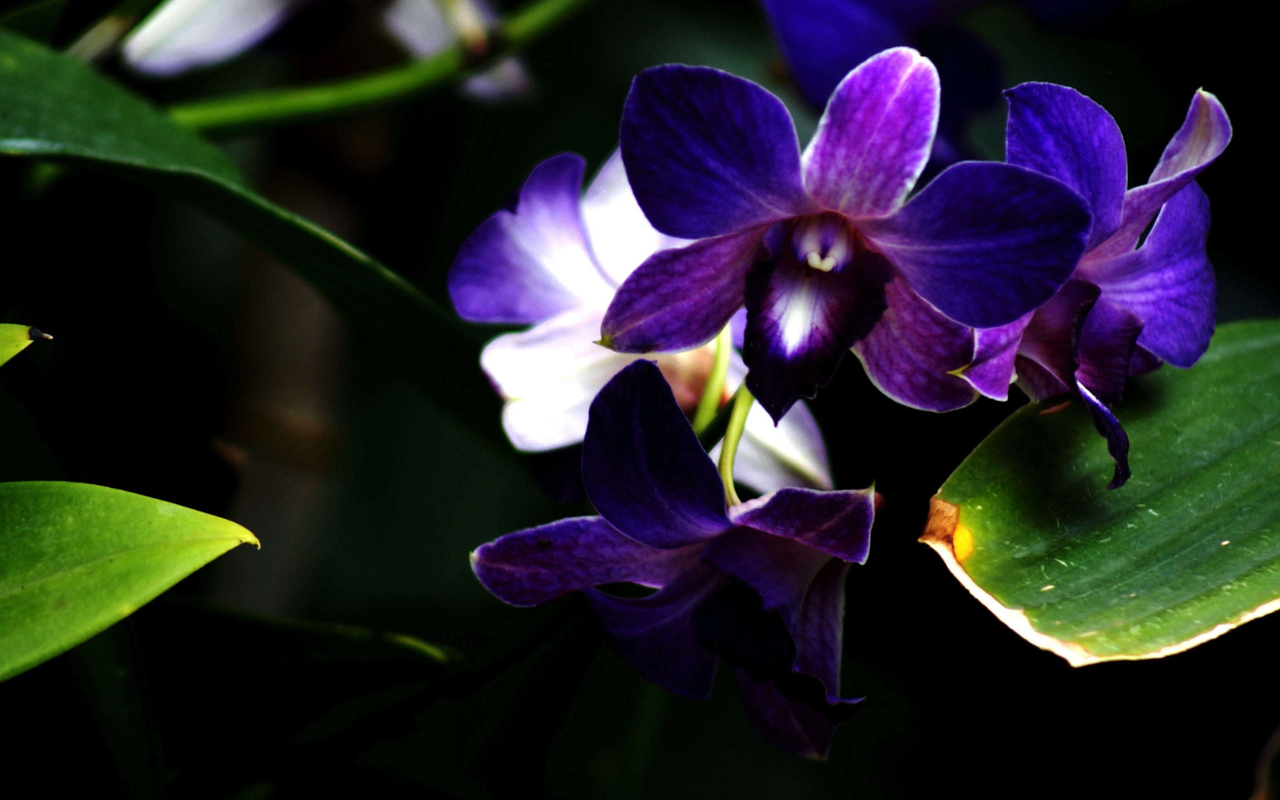 12 Purple Orchid Flower Photography wallpapers 807 2560x1600