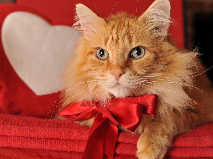 Cute kitty on Valentine Day wallpaper   ForWallpapercom 808x606