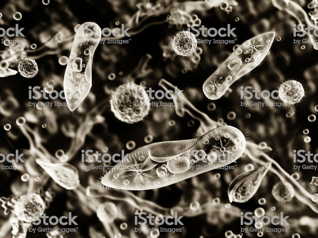 Protozoa Infusoria Under A Microscope Stock Photo   Download Image 1024x768
