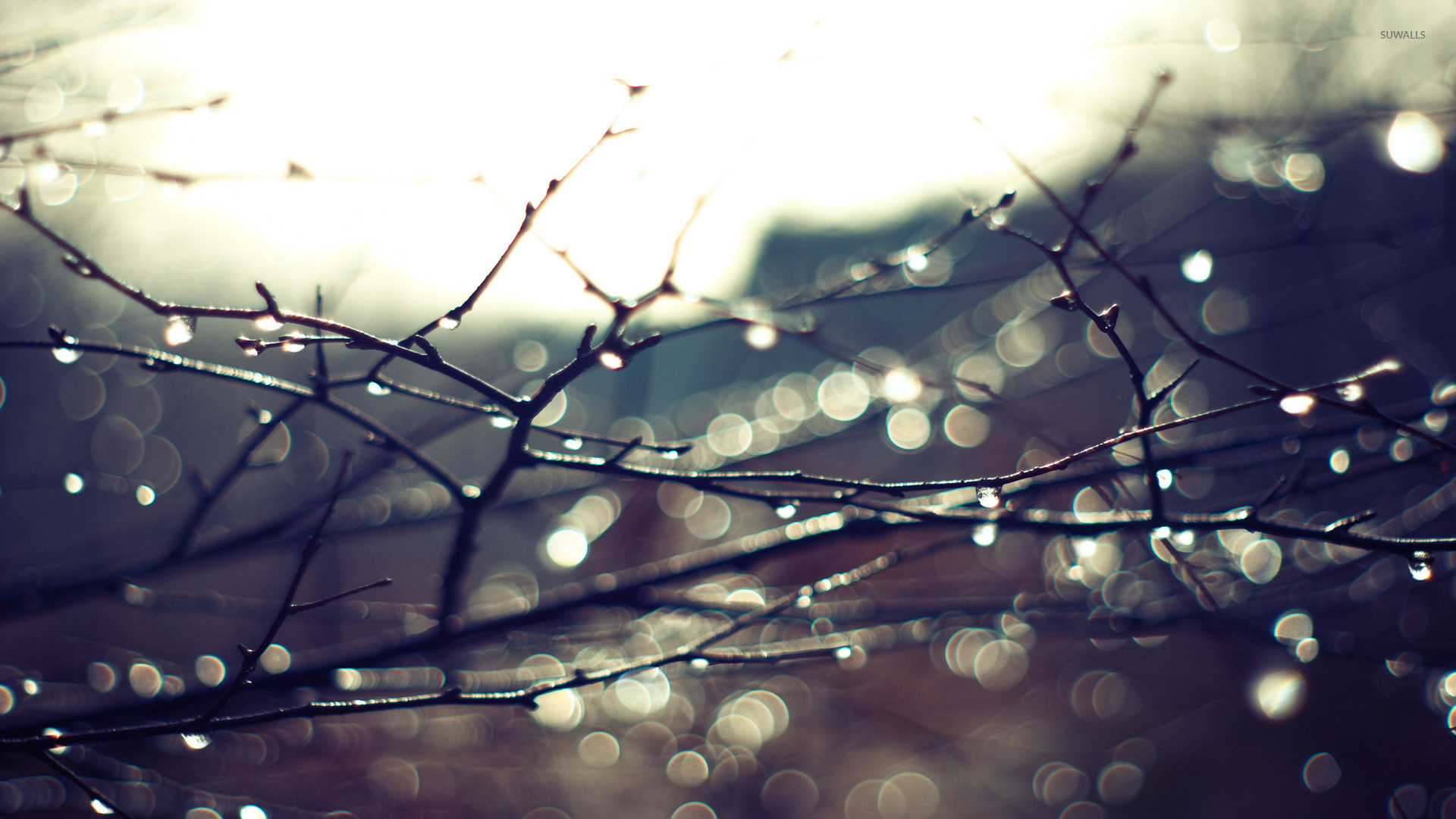 Wet branches wallpaper   Photography wallpapers   16048 1920x1080